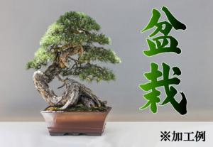 「盆栽」の筆文字素材の加工例